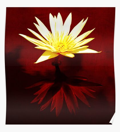 Water Lily Red Bath Poster