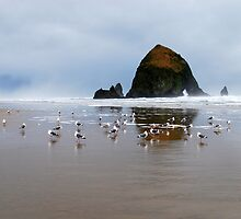 Haystack Rock, Cannon Beach, Or  USA by Jennifer Hulbert-Hortman