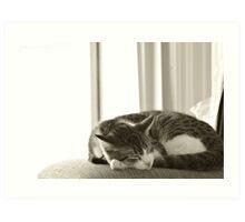 Sleeping Oscar Art Print