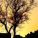 City Sunset by bkphoto