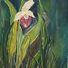 Ladyslipper   acrylic x10  by eoconnor