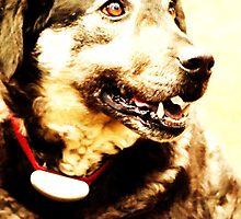 Barn Dog by Kelly Gara