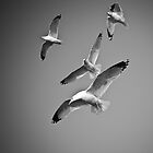 Birds in Flight by Tom Piorkowski