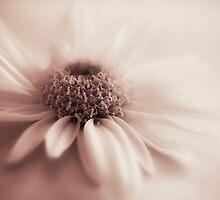 Daisy by ElidArt