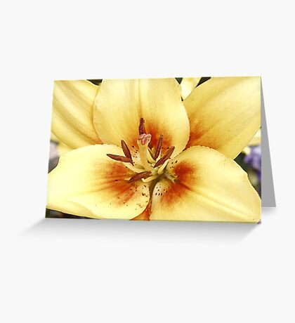 Sunny Sentiments Greeting Card