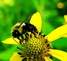 Bumble Bee by Tricia Stucenski