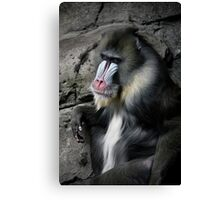 mandrill Canvas Print