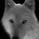 Wolf by Sandy Keeton