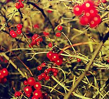 Berries in the wild, stay with me for a while by Th3rd World Order