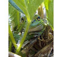 Motorbike Frog Photographic Print