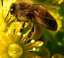 Busy Bee by Esther's Art and Photography