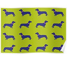 Sausage Dogs - blue & green  Poster
