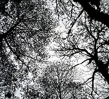 treetops 3 by Bruce  Dickson
