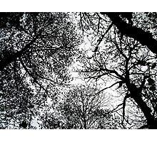 treetops 3 Photographic Print