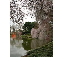 Japanese Garden in Cherry Blossom Season Photographic Print