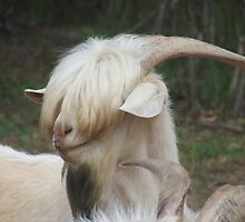 The shaggy Goat by Kimberly Petersen