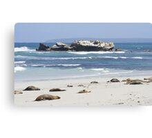 Seal Bay, Kangaroo Island, Australia Canvas Print