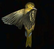 Bird That Flew Into the Window by Barbara Wyeth