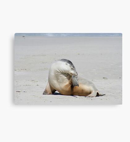 Sea lion at Kangaroo Island, South Australia Canvas Print