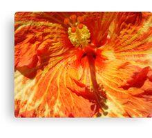 Orange-Red Hibiscus-(Macro) Canvas Print
