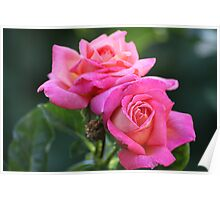 Twin Pink Roses Poster