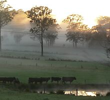 Cattle In The Mist by louisegreen