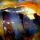 Jellyfish #4 by lanebrain photography