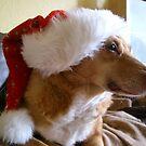 Santa Paws by Ladymoose