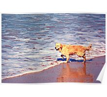 A dog to be happy to be at the beach Poster