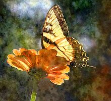 Wings by Tibby Steedly