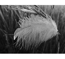 Feathered Grass Photographic Print