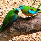 Colours of Nature- Australian Native Birds, Bees and Butterflies by Coloursofnature