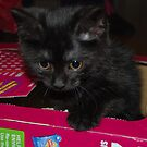 Puss in a box by KeepsakesPhotography Michael Rowley