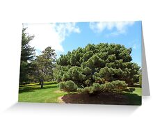 tree landscapes as natures paintbrush 6 Greeting Card