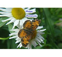 Daisy and Butterfly ..Anniversary Card Photographic Print