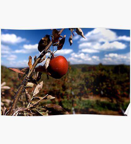 Apple tree, New York. Poster