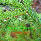 Spruce Bow, Rain Drop ,Christmas Card by MaeBelle