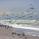 Bird Frenzy by noffi