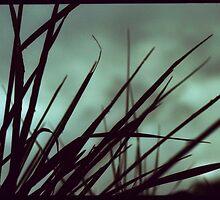 Rainy Day Grass by Brightnewthings