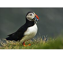 Iceland - Puffin Photographic Print