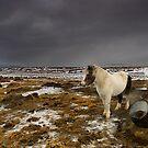 Iceland - full of magic by Patrycja Makowska
