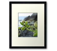 Elven Flower Framed Print