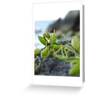 Elven Flower Greeting Card