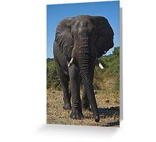 African Elephant (Loxodonta africana) Greeting Card