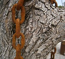 Rusty chain and a olive tree by DikHendriks