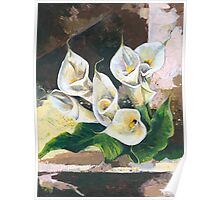 Callas - One of my Favorite Flowers Poster