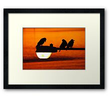 early morning streetlight with rooks Framed Print