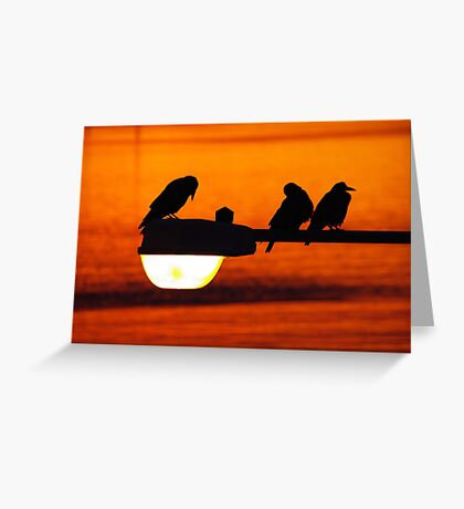 early morning streetlight with rooks Greeting Card