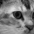 Lilly The Cat 2 by Godwin Jacob D'Souza