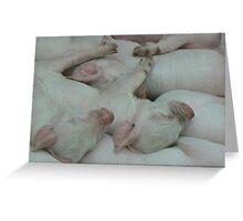Piglets sleeping Greeting Card